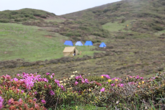 Juniper Trek, Alpine Flower Trek, 2 Nights Trek in Bhutan